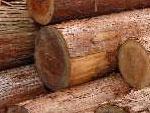 徳島杉の存在価値